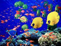 How to move aquarium